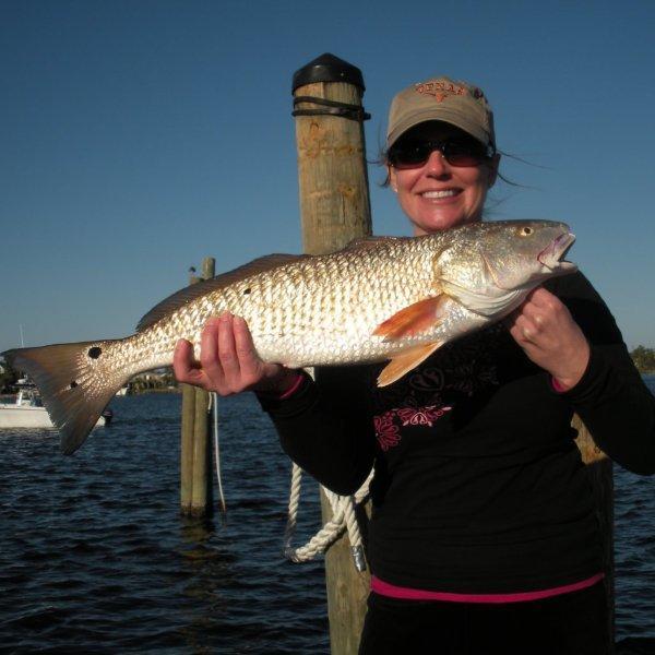 Redfish fishing charters near orange beach alabama gulf for Gulf shores fishing report
